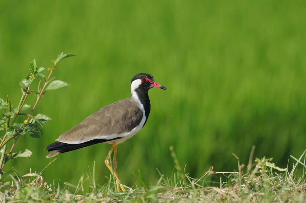 a bird in green field