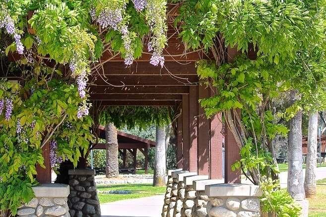 vine gardens