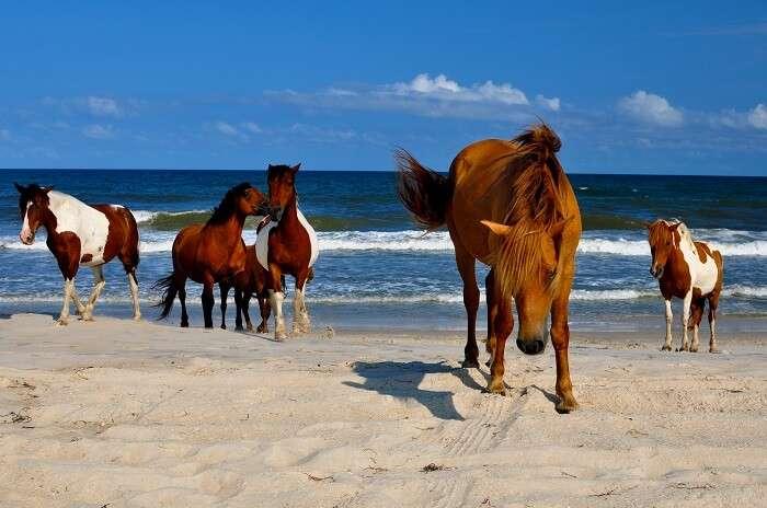 Assateague State Park Beach