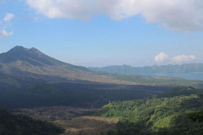 coffee and rice plantations bali