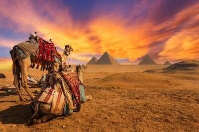 egypt giza sunset pyramids camel