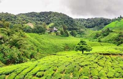 Beautiful hill stations near Singapore
