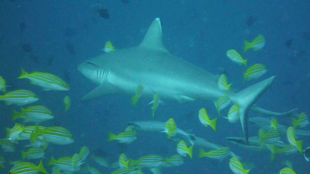 known as Shark Point by tourists