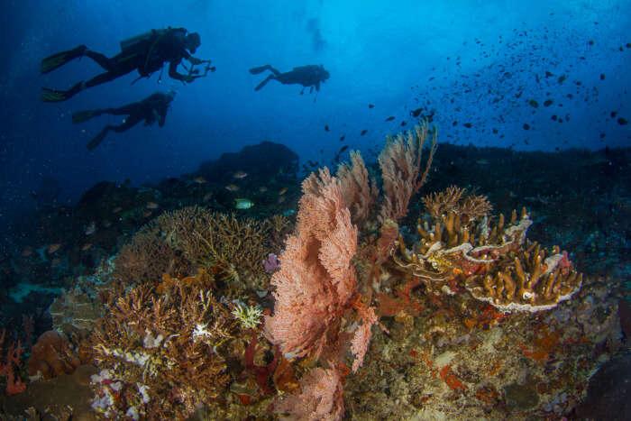 Divers exploring the sea at Nusa Penida