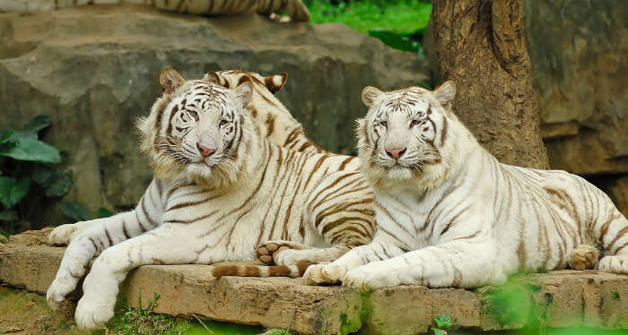 the best zoos of Asia are in Thailand