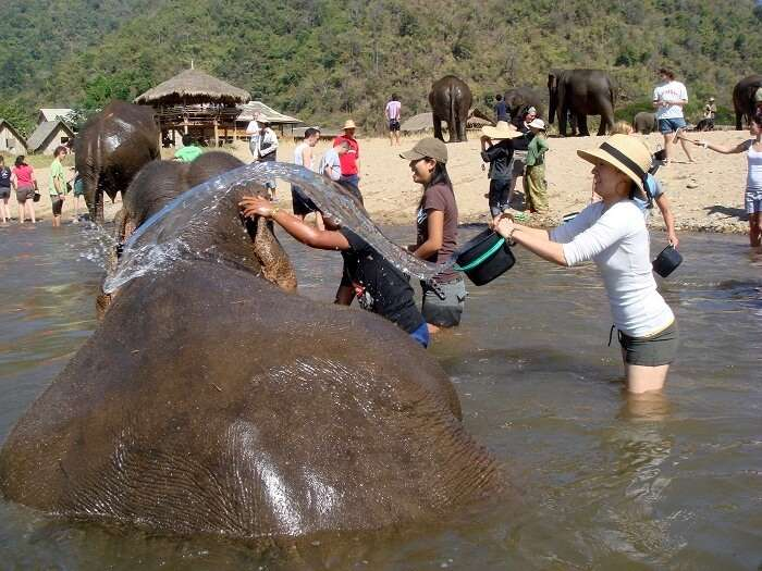 rehabilitation and rescue camp for elephants