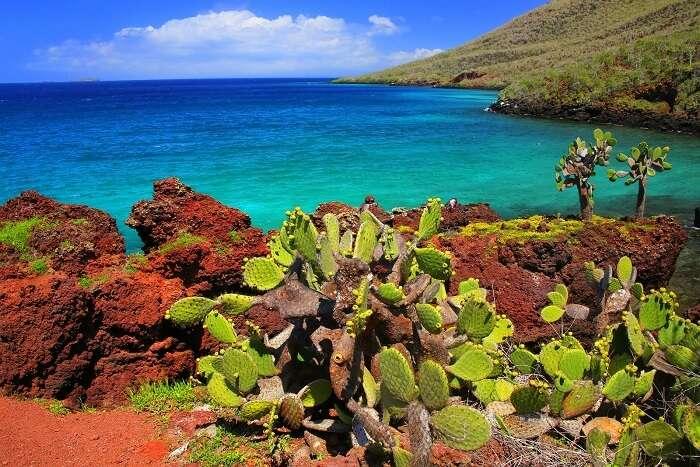 galapagos plants hiking