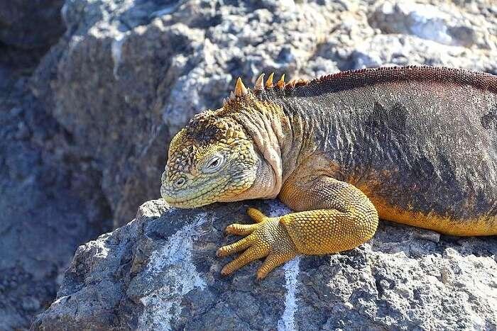 iguana best time to visit