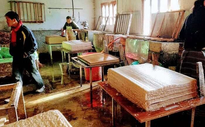 paper is made from local trees of daphne