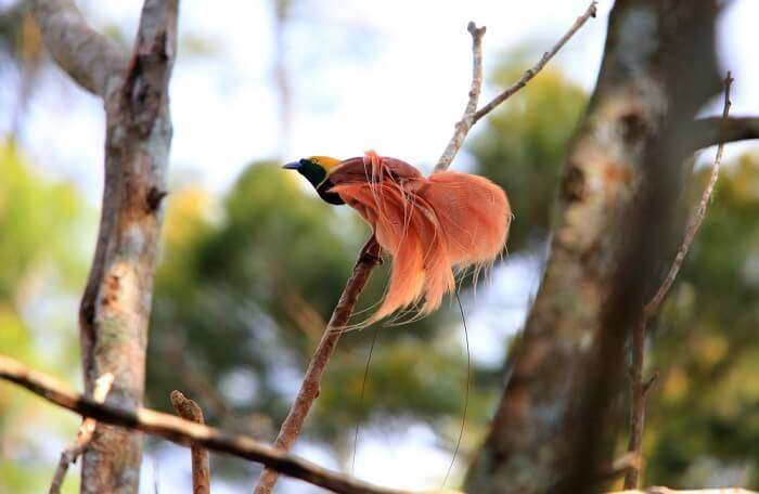 best Papua New Guinea activities for nature enthusiasts