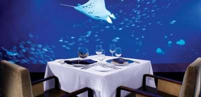 offers the great view of aquarium