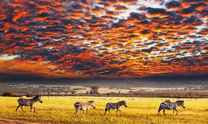 Serengeti National Park >> Serengeti National Park A Detailed Guide For All Travelers