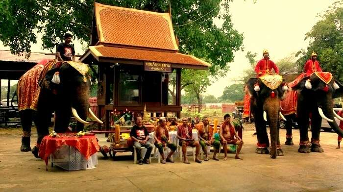 elephant stay