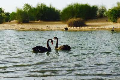 Al Qudra Lakes in Al Marmoom in Dubai