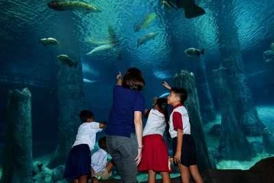 Amazing Amazonia, River Safari Singapore