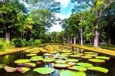 Botanical Garden Mauritius