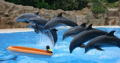 Dolphines in a water park in Hong kong