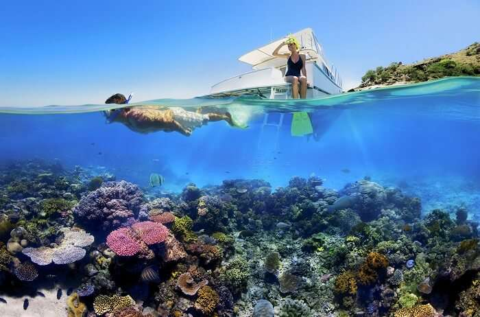 Dive into the coral reef