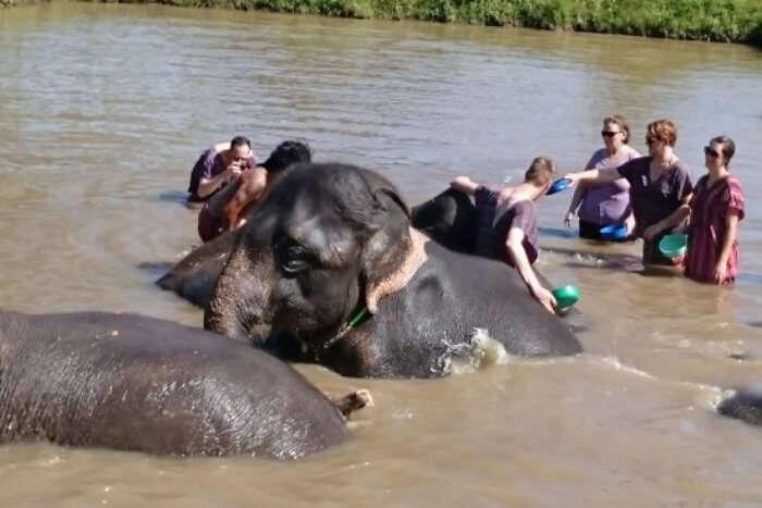 Green Elephant Sanctuary Park, Phuket