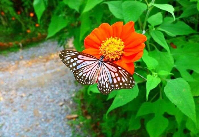 most vibrant local butterflies