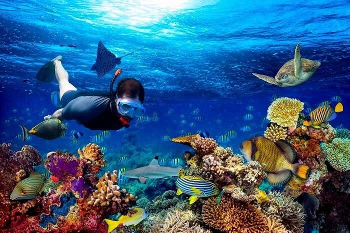Snorkeling In Sri Lanka (Cover)
