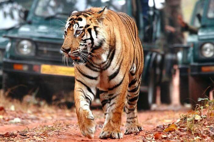 Take the Bardia National Park Safari