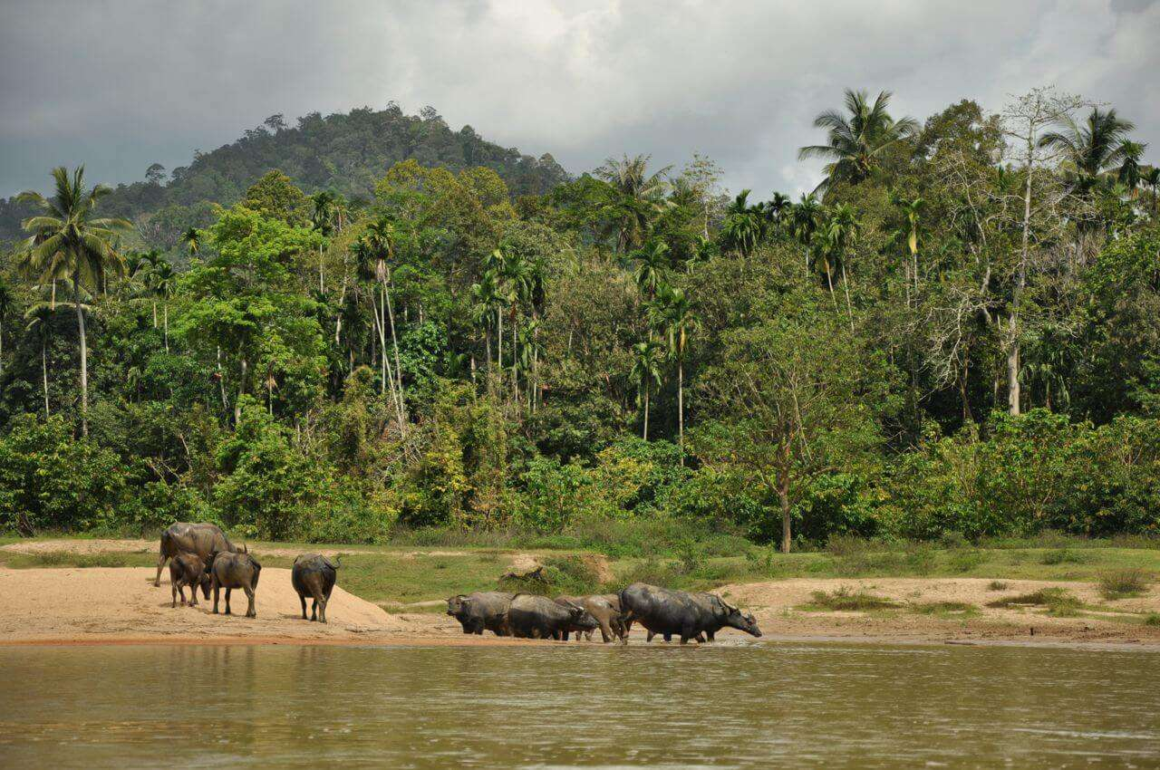 experience the flora and fauna in this jungle