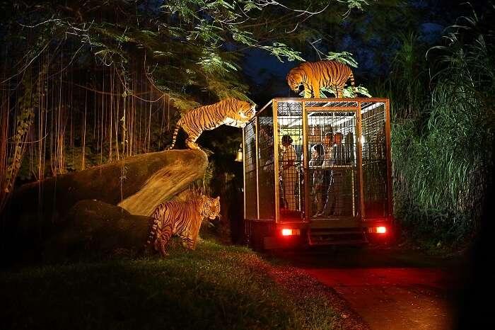 Night Safari Experience