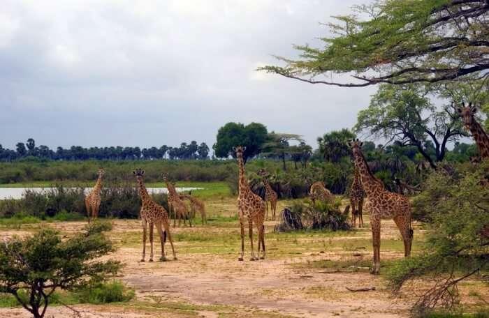 Wildlife Reserve