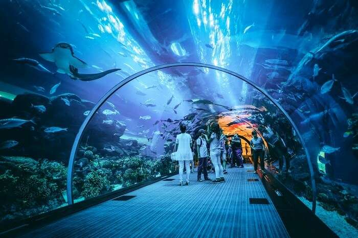 Dubai Aquarium Amp Underwater Zoo All You Need To Know