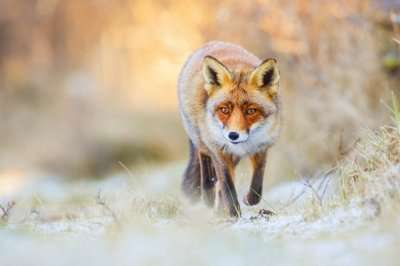 sitzerland wildlife cover