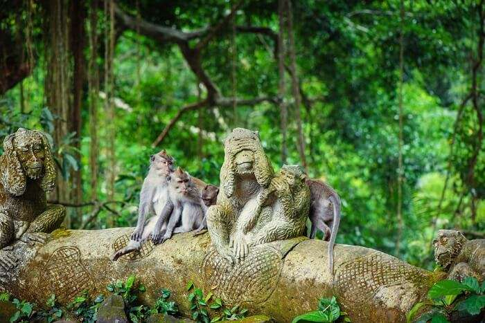 https://img.traveltriangle.com/blog/wp-content/uploads/2018/09/ubud-monkey-forest.jpg