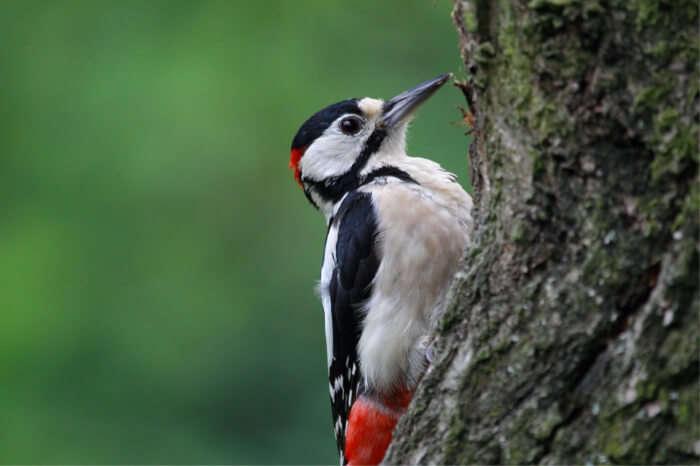 Exotic migratory bird species