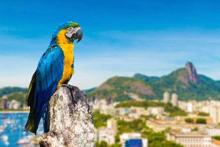 Brazil Wildlife