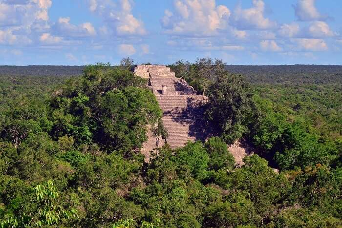 Calakmul in mexico