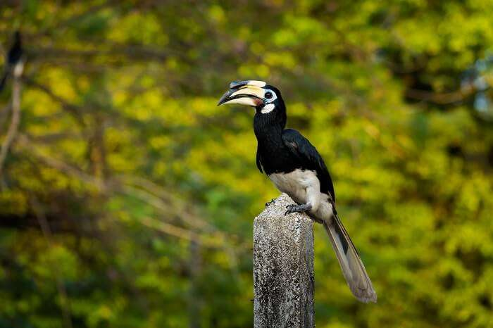 A Handy Guide To Explore Crocker Range National Park
