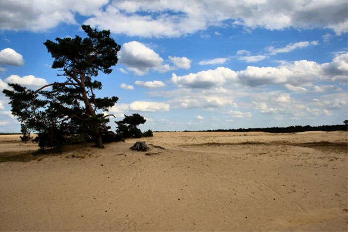 best national parks in Netherlands