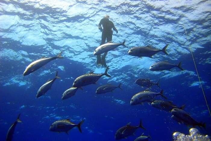 Diving Fish Sea under water
