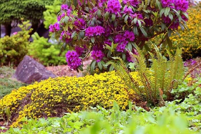 Rock and Fern Garden