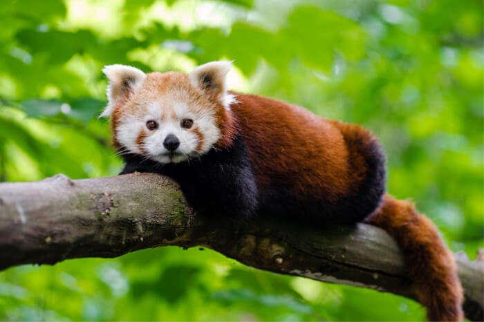 Sakteng Wildlife Sanctuary