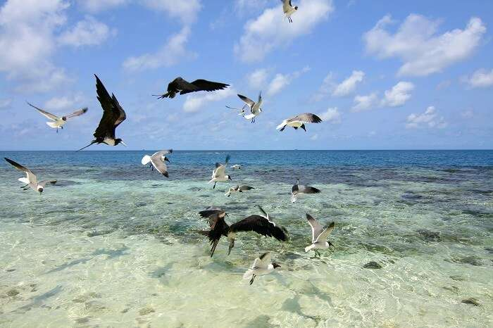 Queen Caye is another place name