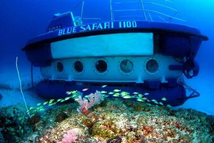 Things To Know Blue Safari