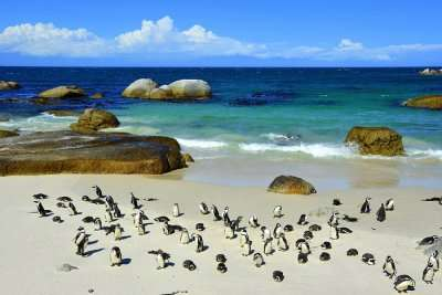 boulders beach cover img