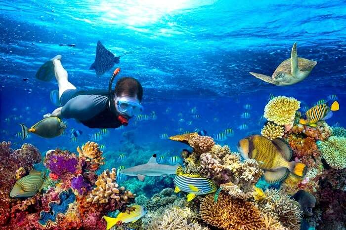 f6fb6041ea8 Snorkeling In New Zealand: 6 Best Places To Swim Through Ultimate Joy!