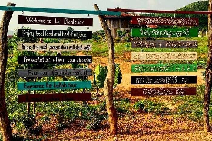 la plantation.jpg