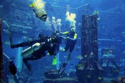 Beautiful Aquarium In Dubai