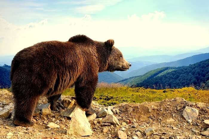 Best Zoos In Alaska
