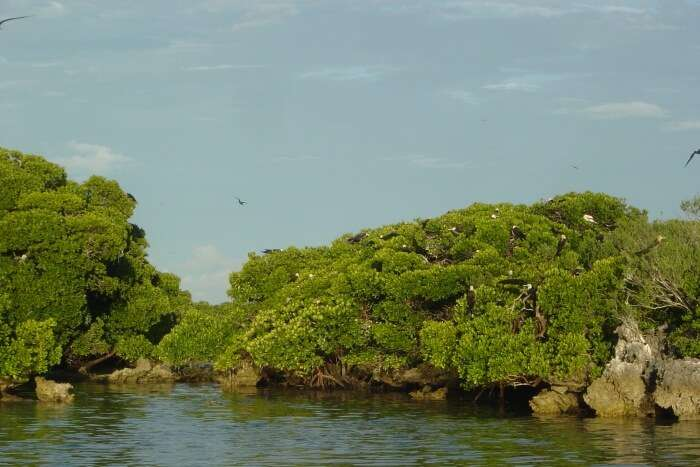 Atoll d''Aldabra (Seychelles)