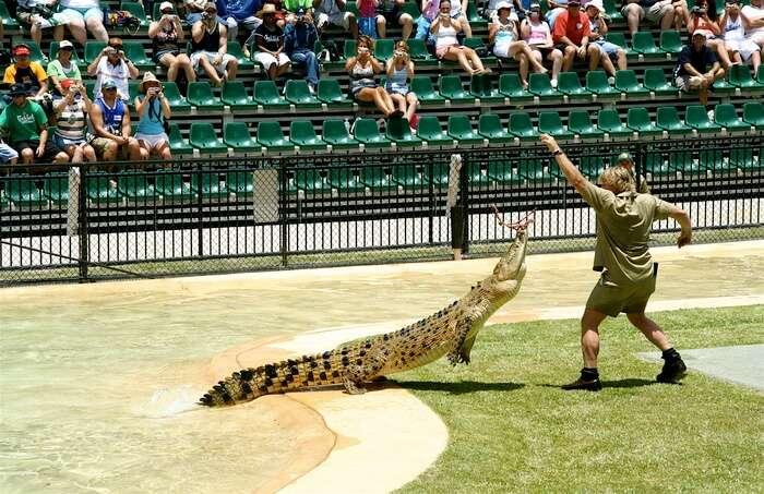 Crocodile and man