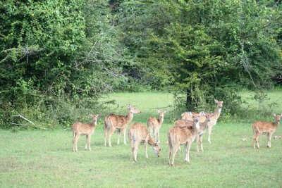 Best of Kumana National Park